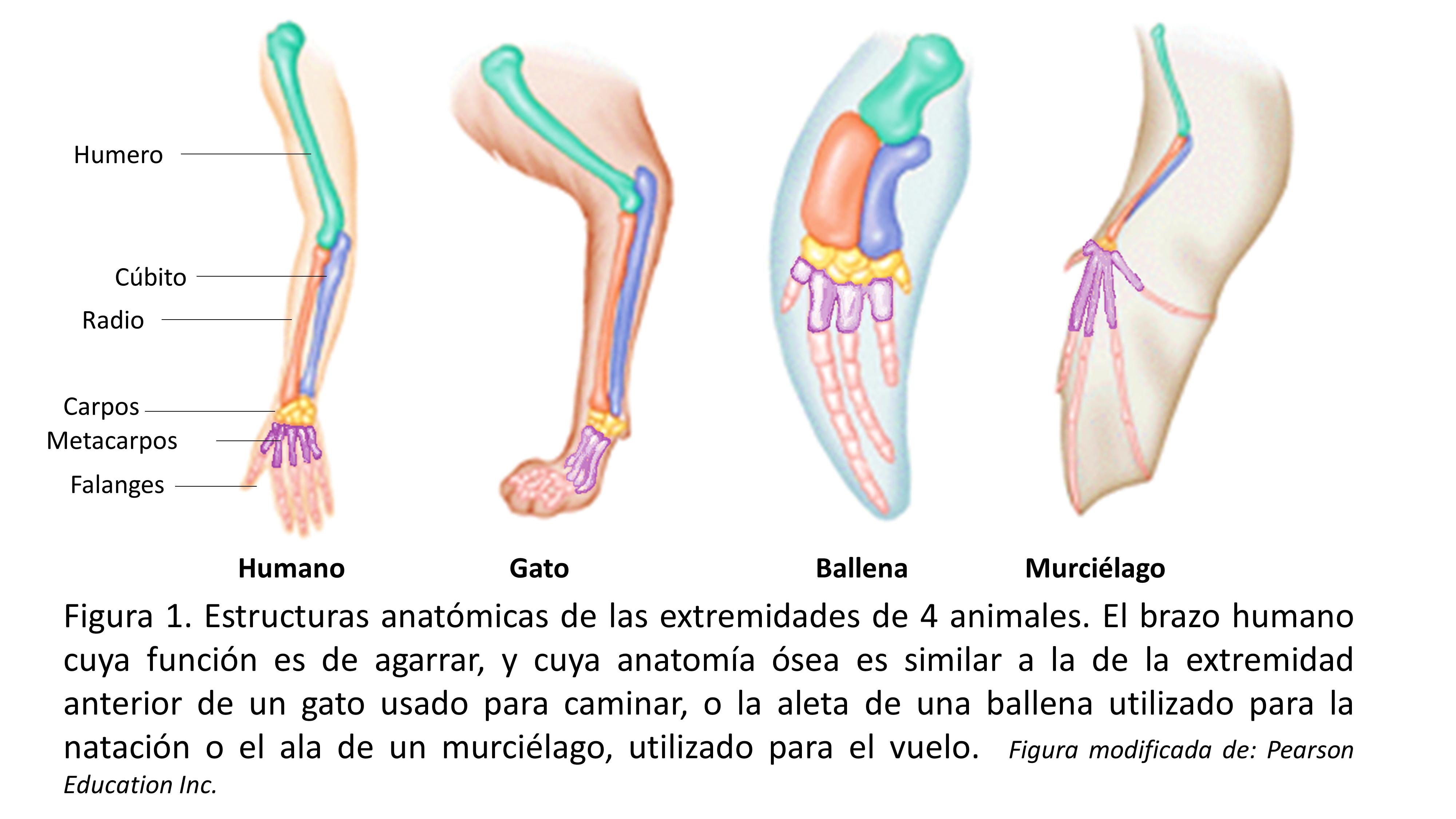 Evolución: Visión general de la biología evolutiva en la medicina ...